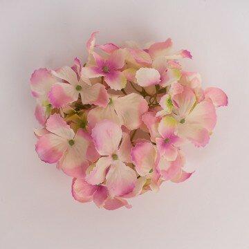 Головка гортензии изящной нежно розовая