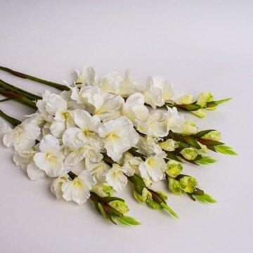 Ветка гладиолуса белая