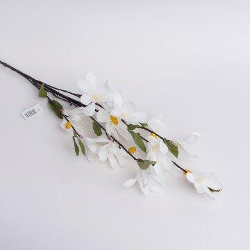 Веточка магнолии мелкоцветущей белая