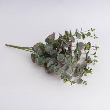 Куст эвкалипта болотно-зеленый