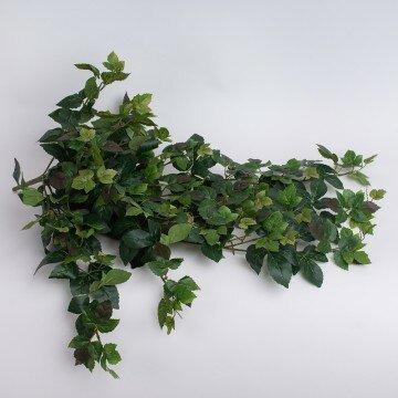 Куст винограда свисающий