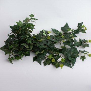 Куст плюща крупный с зелеными листьями